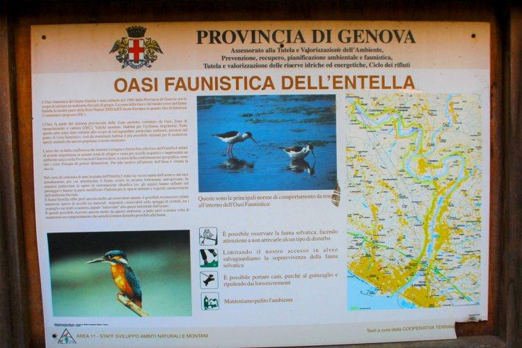 Wildlife oasis of the River Entella